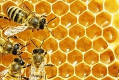 Miele, pappa reale, polline e propoli per gli sportivi