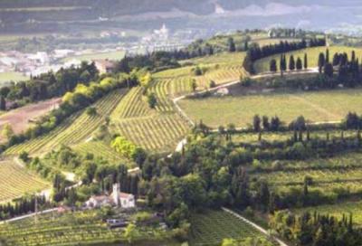 Granfondo Zenato, al via la prima edizione