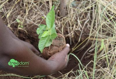 Giornata dell'ambiente: nasce la foresta di Northwave