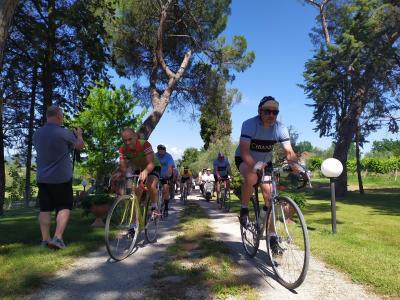 Torna la Chianina Ciclostorica, per i ciclisti che amano il vitange