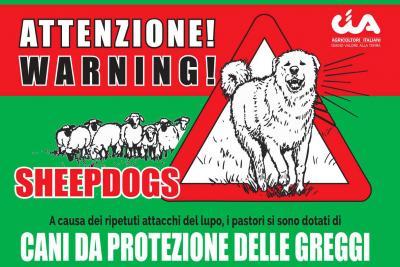 Animali lungo il percorso: come difendersi da cinghiali e cani da pastore